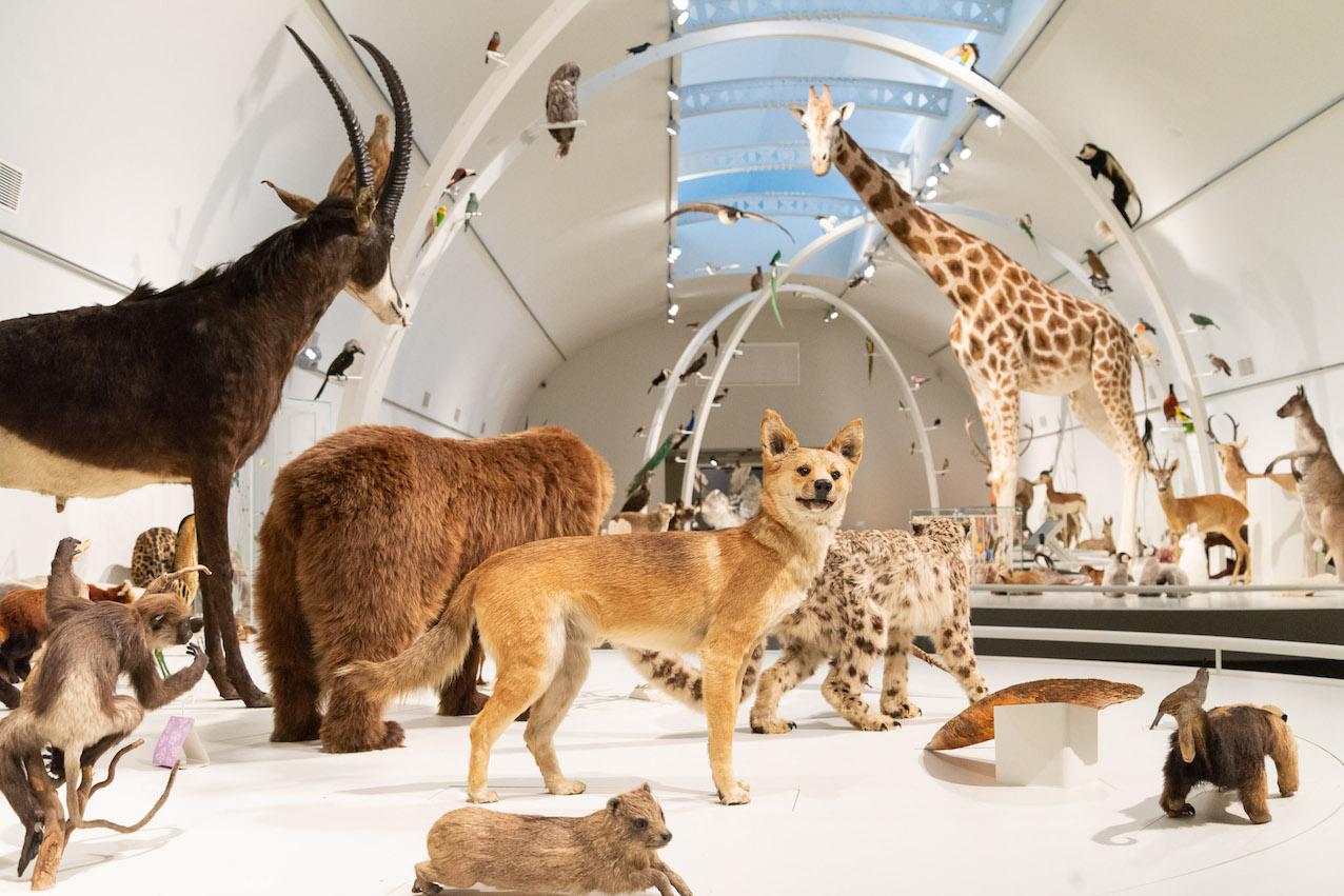 """Galerie de la biodiversité """"Planète Vivante"""". © Thierry Hubin IRSNB"""